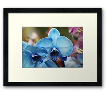 Blue Orchid 7053 Framed Print
