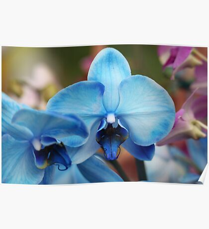 Blue Orchid 7053 Poster