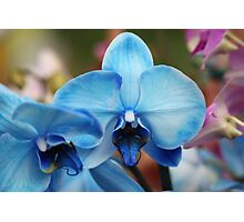 Blue Orchid 7053 Photographic Print