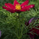 Red Flower 7125 by Thomas Murphy