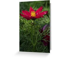 Red Flower 7125 Greeting Card