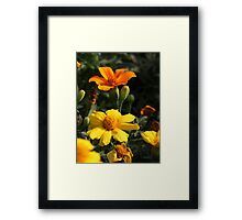 Flower 7130 Framed Print