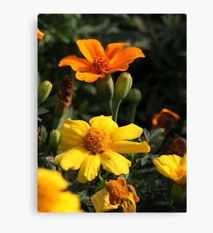 Flower 7130 Canvas Print