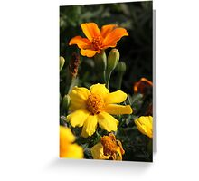Flower 7130 Greeting Card