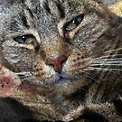 Tabby Cat Face Portrait by Jane Underwood