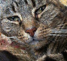 Tabby Cat Face Portrait by Jane Underwood