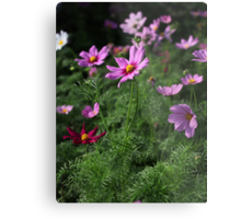 Cosmos Plus 7145 Metal Print