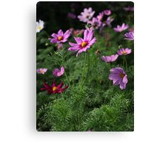 Cosmos Plus 7145 Canvas Print