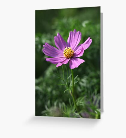 Cosmos 7150 Greeting Card