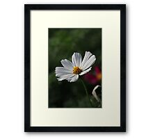 Flower 7156 Framed Print