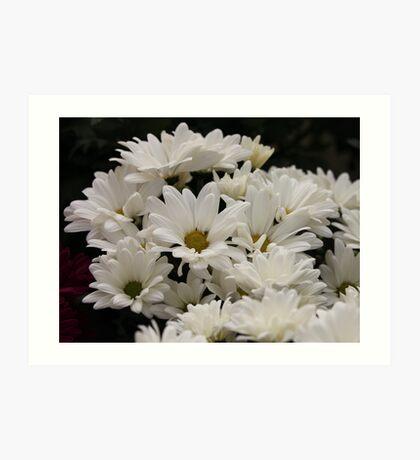 Daisy Flowers 7083 Art Print
