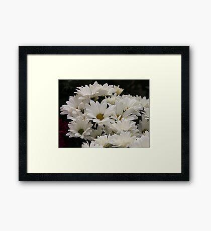 Daisy Flowers 7083 Framed Print