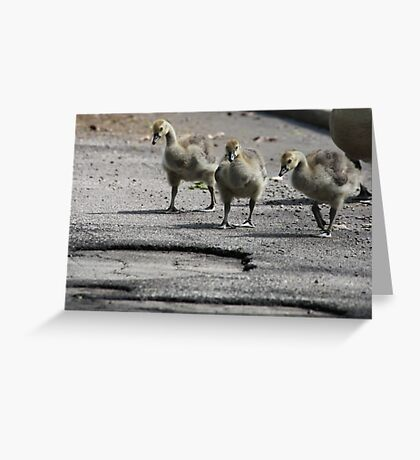 The Gosling Gang Greeting Card