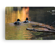 The Leading Ducks Canvas Print