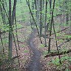Ravine Trail 3307 by Thomas Murphy