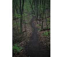 Ravine Trail 3310 Photographic Print