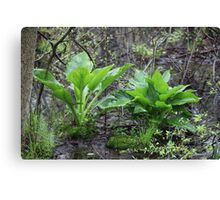 Ravine Trail Vegetation 3281 Canvas Print