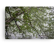 Birch Tree Waterscape 3129 Metal Print