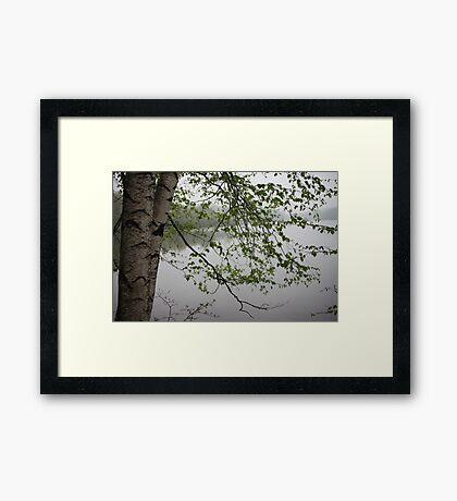 Birch Tree Waterscape 3235 Framed Print