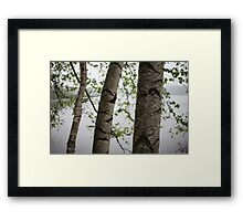 One Two Three Birch Tree 3238 Framed Print