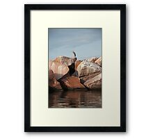 Blue Heron on Red Rock Framed Print