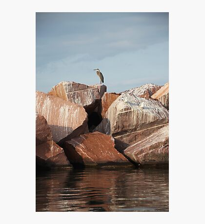 Blue Heron on Red Rock Photographic Print
