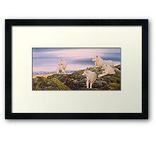 Arctic wolves Framed Print