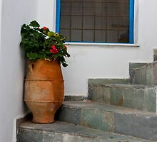 Geraniums In Terra Cotta by phil decocco
