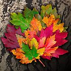 A bouquet of Leaves . . . . by evon ski
