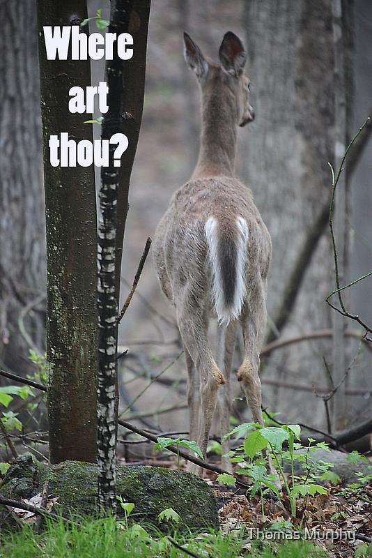 Where art thou? by Thomas Murphy