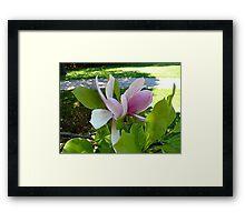 Magnolia in Spring Framed Print