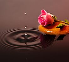 Pink Rose in Water by Riaan Roux