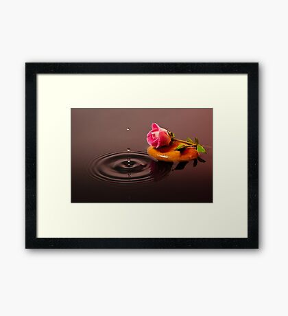 Pink Rose in Water Framed Print