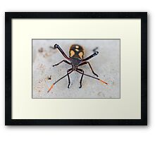 Garden Insect - macro Framed Print