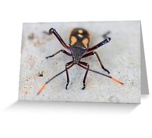 Garden Insect - macro Greeting Card