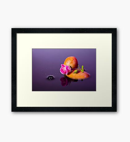 Pink Rose - Water Splash Framed Print
