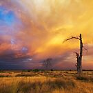 Epic December Sky by Rob  Southey