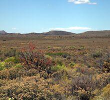 Karoo landscape by Chris Fick