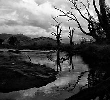 Mitta River, North East Victoria by Jenny Enever
