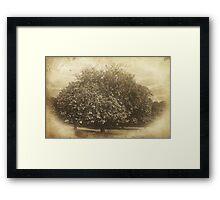 Phoenix Park, Dublin Framed Print