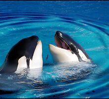 Love Sharing: Seaworld by Cherubtree