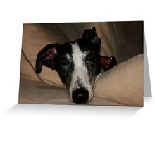 Momo the Spanish Greyhound Greeting Card