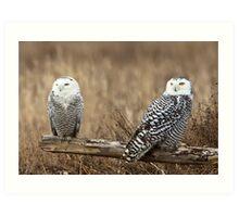 Snowy Owl Pair Art Print