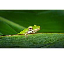 Intrepid Treefrog Photographic Print