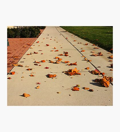 Orange Leaf Road Photographic Print