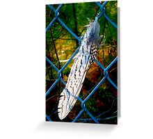 New Years Eve Feather By Jonathan Green Greeting Card