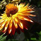 Seeking the sun by MarianBendeth