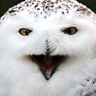 Snowy Owl  by HollyRuthven