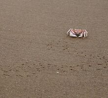 Mozambican Beach - crab and tracks by Chris Fick