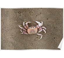 Mozambican Beach - crab on beach Poster